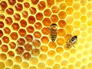 miele e fior di vita