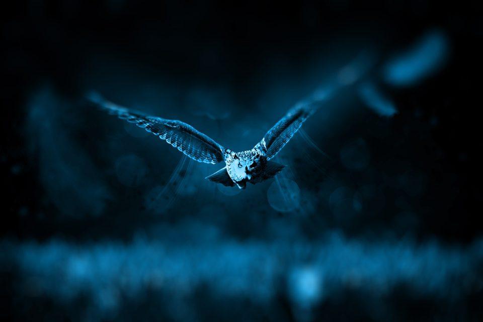 paura nella notte