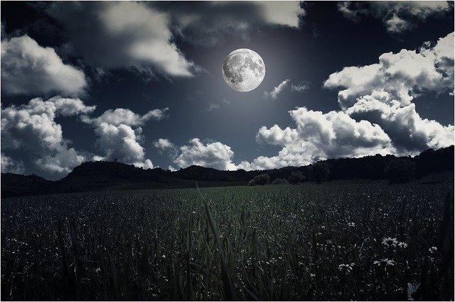 luna-dopra-fiori-selvatici